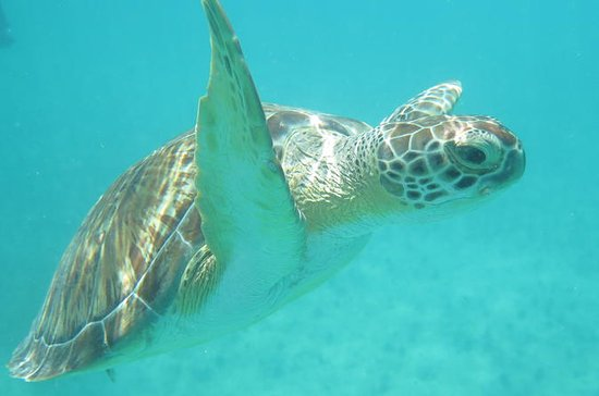 Sea Turtle Snorkel and Nature Walk...