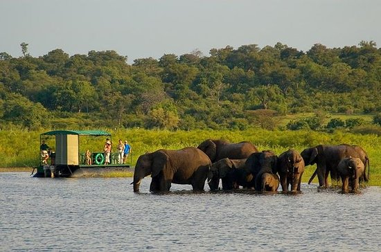 Chobe National Park 4X4 Day Safari...