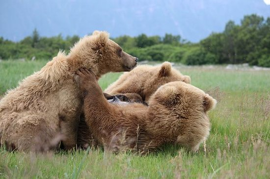 Full-Day Sightseeing and Bear Watching Trip