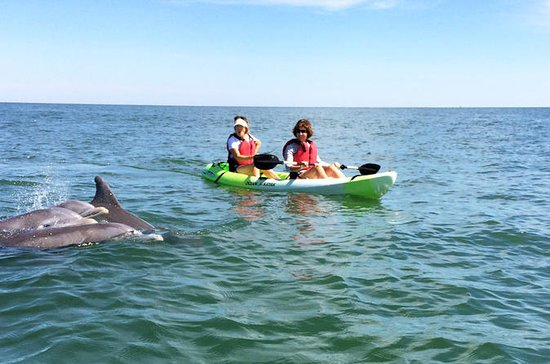Small Group Dolphin Kayak Eco Tour