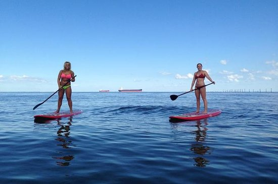 Dolphin Stand Up Paddleboard Down-Wind Eco-Tour