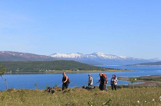 Wanderung mit Huskies ab Tromsø