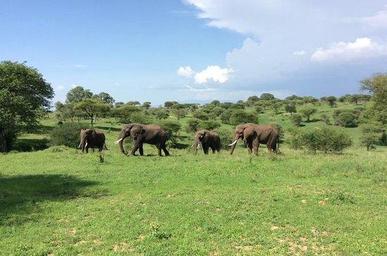 Multi-Dia Tanzânia Odssey Safari de...