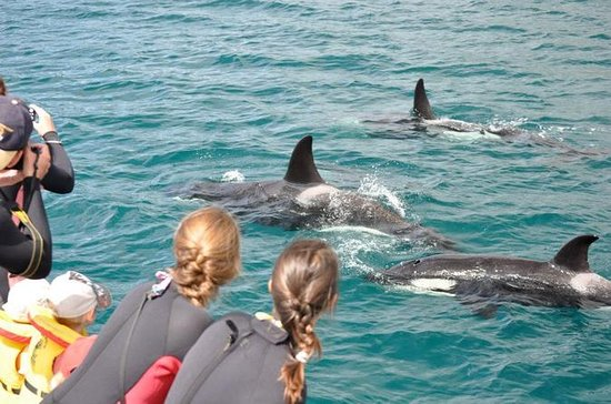 Half-Day Dolphin Viewing Eco-Tour...
