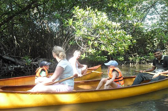 Unawatuna Lagoon Canoeing Excursion