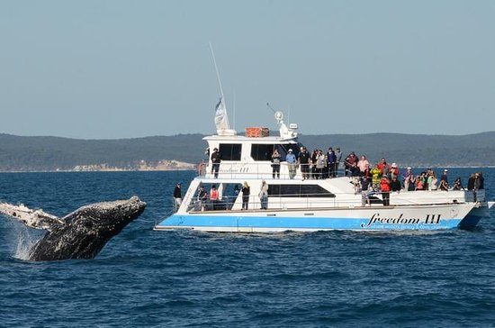 Hervey Bay Premium Whale Watching