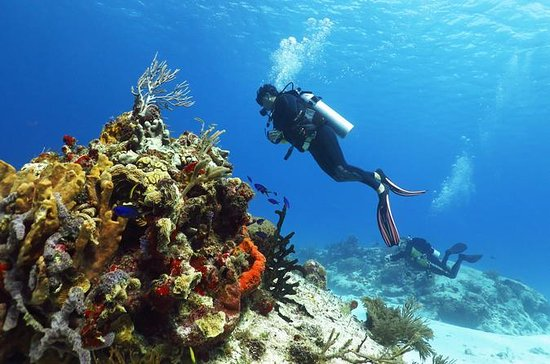 Cozumel Express 2-Tank Dives from ...