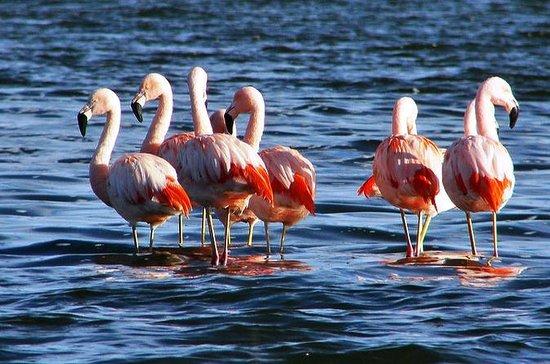 Bull Lagoon and Flamingos Watching...