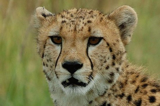 Ann Van Dyk Cheetah Center Tour fra...
