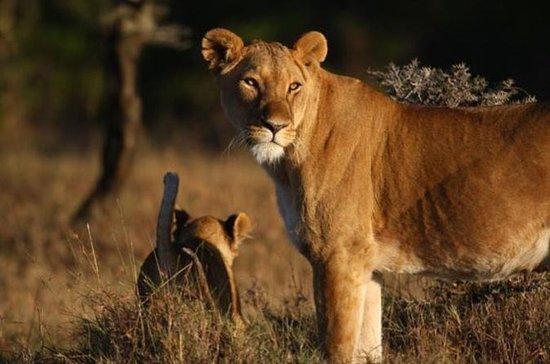 Ol Pejeta Wildlife Conservancy Day...