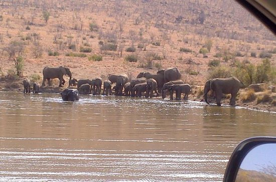 Pilanesberg National Park Full-Day...