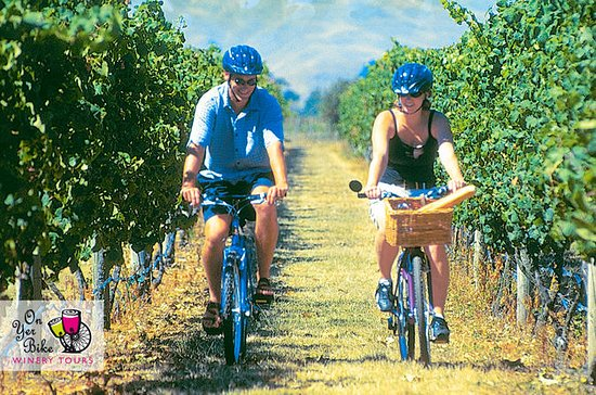 Hawkes Bay Wineries Self-Guided Bike...