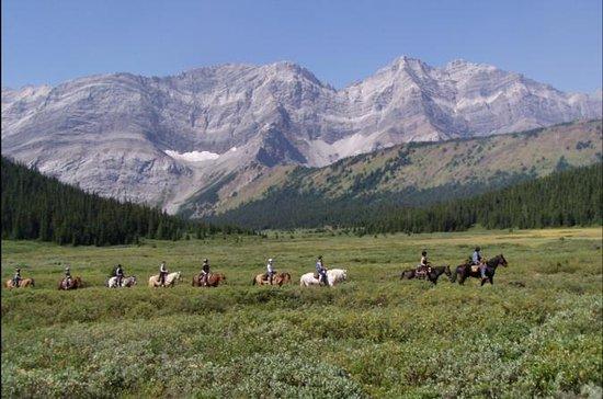 Half-Day Horseback Trail Ride in...