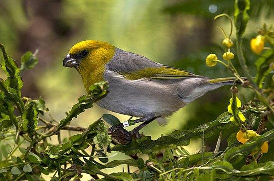 Aves en peligro de Hawaii