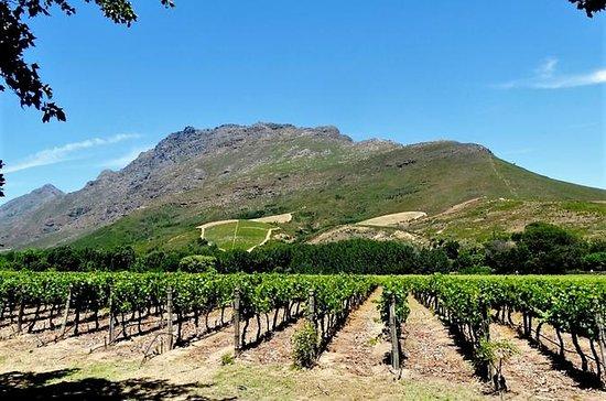 Stellenbosch Winelands Visite guidée...
