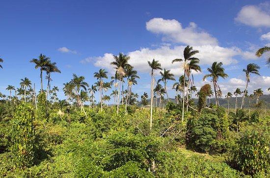 Private Negril Tour Von Montego Bay