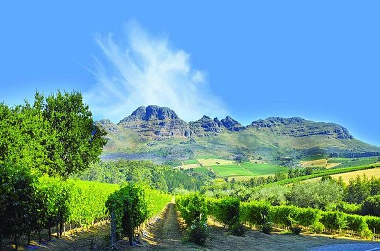 Cape Winelands Guided Day Tour from...