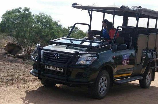 Full-Day Kruger National Park Safari