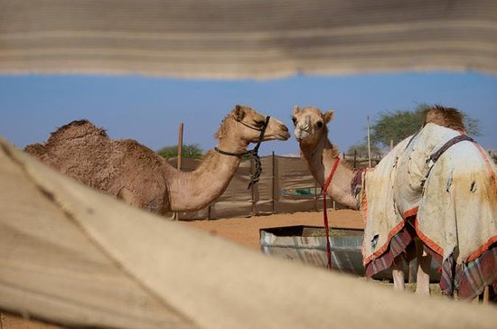 Al Ain City Sightseeing Tour - The ...