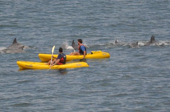 Sea Kayak and Cape Point Private Tour ...