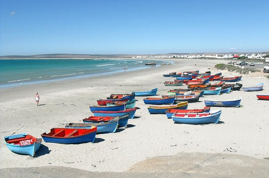 Cape West Coast Private Day Tour