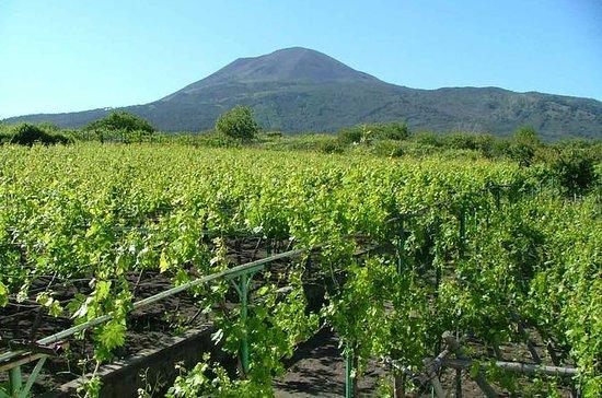 ポンペイとヴェスヴィオ山を巡るワイン・テイスティングの旅