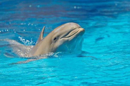Delphinarium d'Alanya