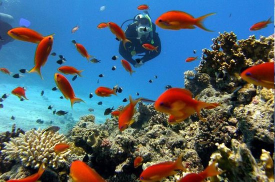 Scuba Diving for Beginners in Didim