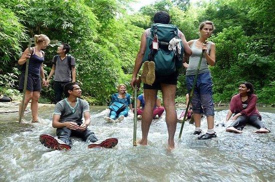 Privat tur: Full-Day Trekking...