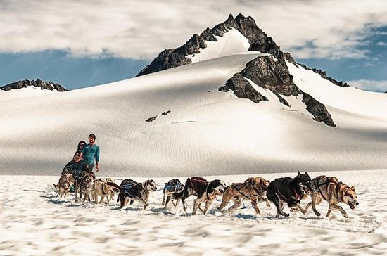 Helicopter Glacier Dog Sledding