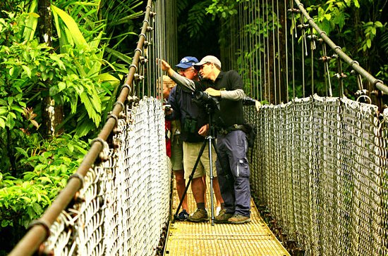 Mistico Park Hanging Bridges Guided...