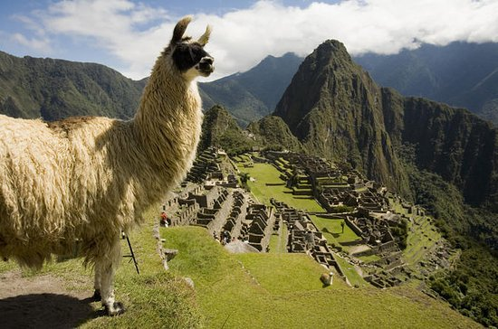 Machu Picchu Private Guided Tour from...