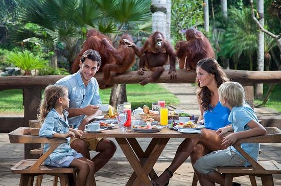 Breakfast with the Orangutans at Bali ...