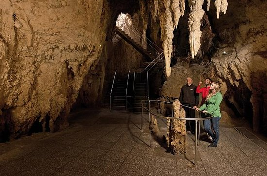 Tauranga Shore Excursion: Waitomo Caves and The Kiwi House