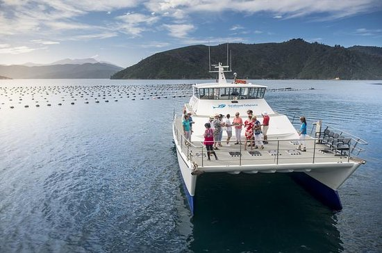 Marlborough Sounds Seafood Cruise ...
