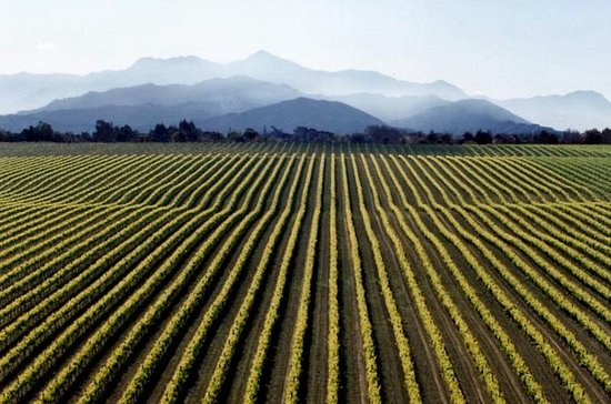 Full-Day Marlborough Wine Tour fra...