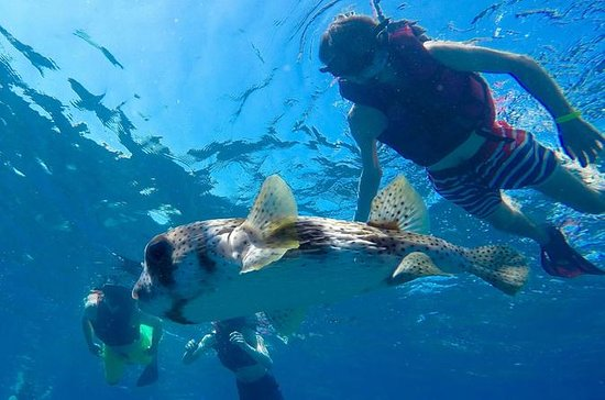 Sosua Bay Snorkeling Tour