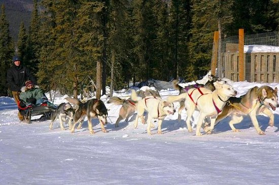 1-Hour Winter Dog Mushing and...