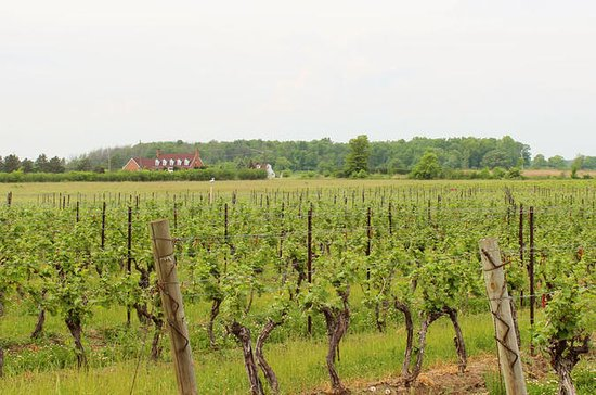 Full-Day Niagara Wine Tour with Lunch...