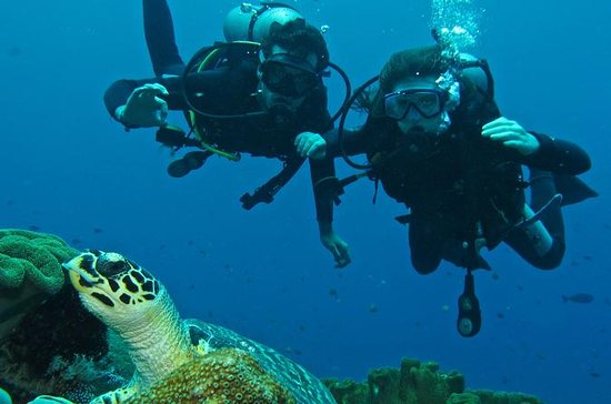 Beginner Scuba Diving Experience in