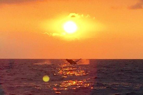 Baleia Assegurada em Kona