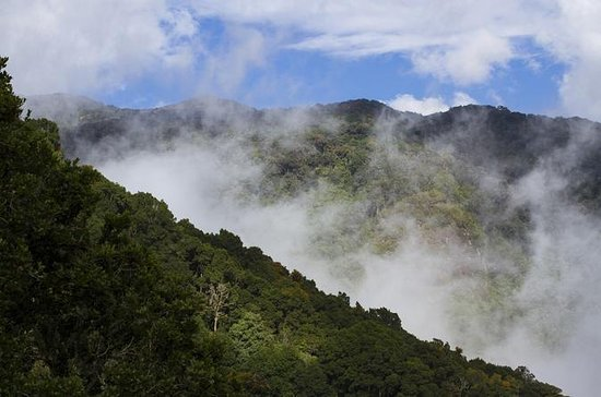 Cloud Forest Hike at Juan Castro...
