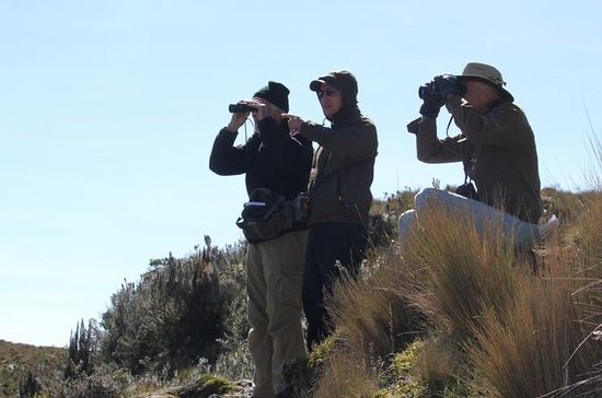 Birdwatching Tour in Cajas National...