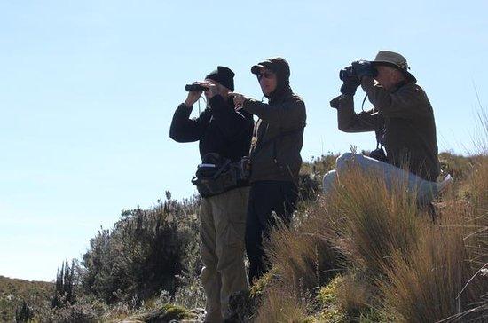 Birdwatching Tour in El Cajas...