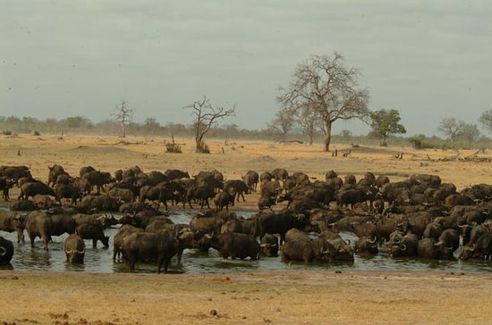 Full-Day Hwange National Park Tour...