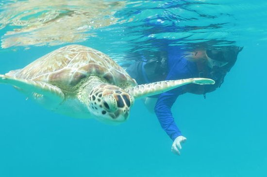Kayak and Sea Turtle Snorkel with...