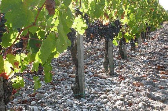 En tur på vinrankene i Château Paloumey...