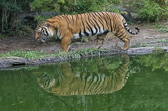 Private Day Trip to Sundarban from...
