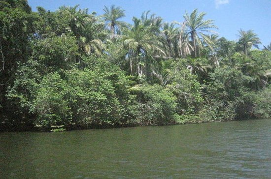 Jungle Boat Tour to Sapiranga Natural...