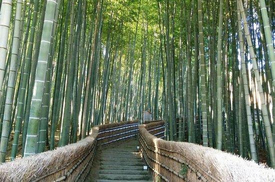 Tour privato delle attrazioni di Kyoto